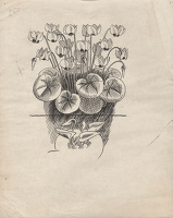 Studies of Cyclamen coüm and for C....