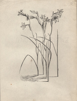 Artist Evelyn Dunbar: Studies of Gladiolus tristis for page 103 of Gardeners' Choice, c.1936 [HMO 36, cat 53]