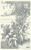 Artist Evelyn Dunbar and Charles Mahoney: Platycodon grandiflorum Mariesii, design for page 137, Gardeners Choice 1937
