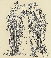 Design for flyleaf, Gardeners' Choice