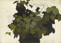 Artist Charles Mahoney: Study of foliage