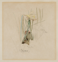 Artist Winifred Knights: Study of a narcissus, for the Flight into Egypt, circa 1938