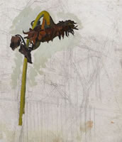 Study of a Sunflower, circa 1940